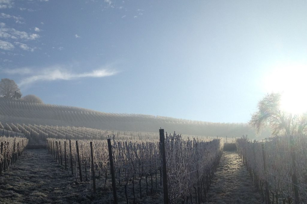 Winter on the vineyard